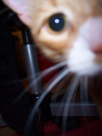 Leo up close and curious