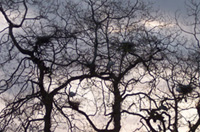 nested branches